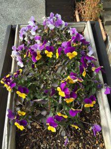 日建ホームの事務所に咲く花