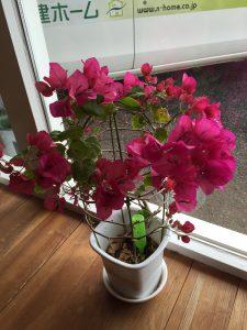 日建ホームの室内植物
